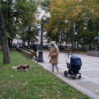 Осенние прогулки ... :: Алёна Савина