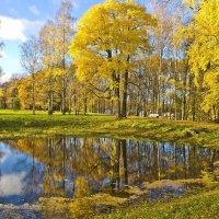 Танцуют листья прощальный блюз... :: Senior Веселков Петр