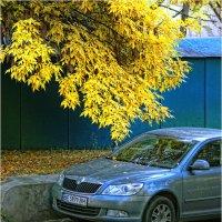 Осень на дворе... :: Сергей Порфирьев