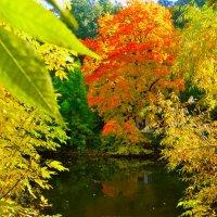 Осенний пруд. :: Oleg4618 Шутченко