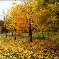 Желтый лист роняет осень... :: Елена Швецова