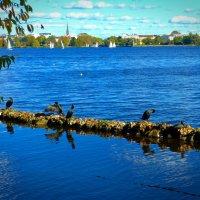 Про бакланов и яхты :: Nina Yudicheva