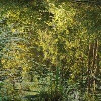 Отражение древ и листвы осенней :: Владимир Гилясев