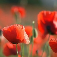 Летние цветы. :: donat