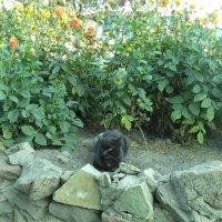 Просто клумба, просто кот. :: - Ivolga