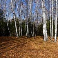 Поздняя  осень :: Геннадий Супрун