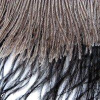 Страусовые перья :: OLLES
