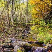 Лесной ручей :: Ольга Решетникова