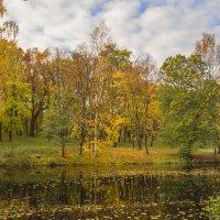На берегу лесного озера :: bajguz igor