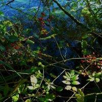 Осенний этюд :: Nina Yudicheva