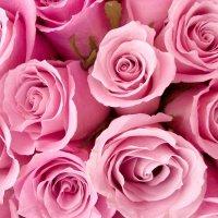 Цветы :: Михаил Томкин