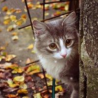 красивый и пугливый Филя :: ...Настя ...