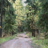 Октябрь в лесу :: Aнна Зарубина
