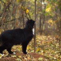 Бегемот кот :: Ирина Солощ
