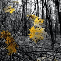 Осень :: Михаил Рогожин