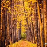 Осеннь :: Дмитрий Чернов