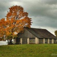 Отдыхающее дерево. :: Елена Kазак