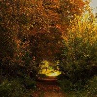Осенний тоннель :: Alexander Andronik