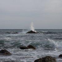 морское настроение... :: Наталья Литвинчук
