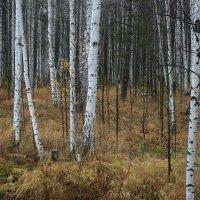 В осеннем лесу :: Дмитрий Солоненко