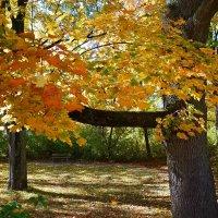 """""""Осенний парк великолепен, Весь в янтарях и хрустале..."""" :: Galina Dzubina"""