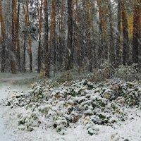 Первой пробой мокрый снегопад... :: Лесо-Вед (Баранов)