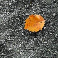 осень :: Юлия Мошкова