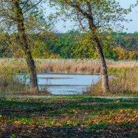 Осень на речном берегу. :: Владимир M