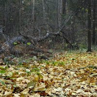Лес... :: Rabbit Photo