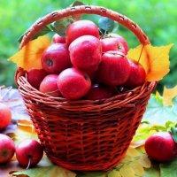 яблочки :: Горкун Ольга Николаевна