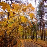 осень в парке :: Наталья Сазонова