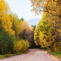 Дорога к дому.Золотой сентябрь :: Яна Старковская