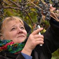 урожай 17-го .... :: Лиана Краснопольская .
