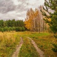 Дыхание осени 5 :: Андрей Дворников