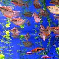 Подводная жизнь :: Елена Круглова
