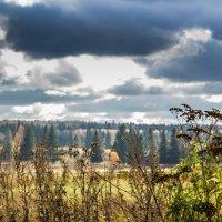 Уж небо осенью дышало... :: Владимир Буравкин