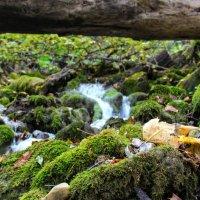 Осень горные ручьи :: Вячеслав Случившийся