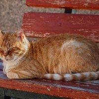 Дворовый кот (глаза открыть не захотел) :: Юрий Яловенко