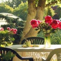 Утренний кофе в саду. :: Елена Kазак