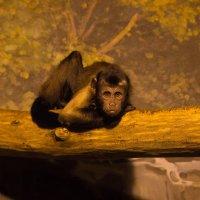 Зоопарк Лимпопо :: Елена Князева