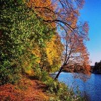 осень :: Ольга Богачёва