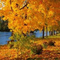 Осенние краски. :: Алексей Жуков