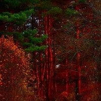 огненный лес :: Юлия