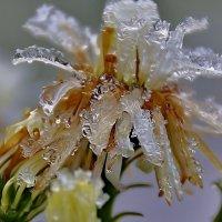 Аленький  цветочек :: Ольга Cоломатина