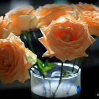 цветы для любимых :: Олег Лукьянов
