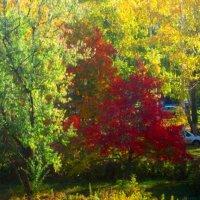 яркие краски осени :: Горкун Ольга Николаевна