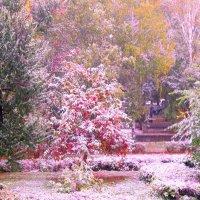 первый снег в начале октября :: Горкун Ольга Николаевна
