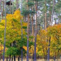 По лесам гуляет осень. Краше этой нет поры… :: Валентина ツ ღ✿ღ
