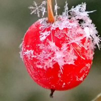 А снежинки быстро тают.... Октябрь :: Геннадий Ячменев