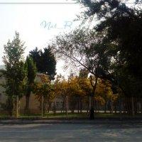 школа... осень... цвета.... :: maxim